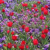 Gisela, FLOWERS, BLUMEN, FLORES, photos+++++,DTGK1933,#f#