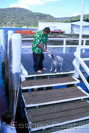 Riverboat Postman delivers mail to Bar Point Rescue Service man Bill Glover and his dog (carrying mailbag) at Kangaroo Point, Brooklyn NSW
