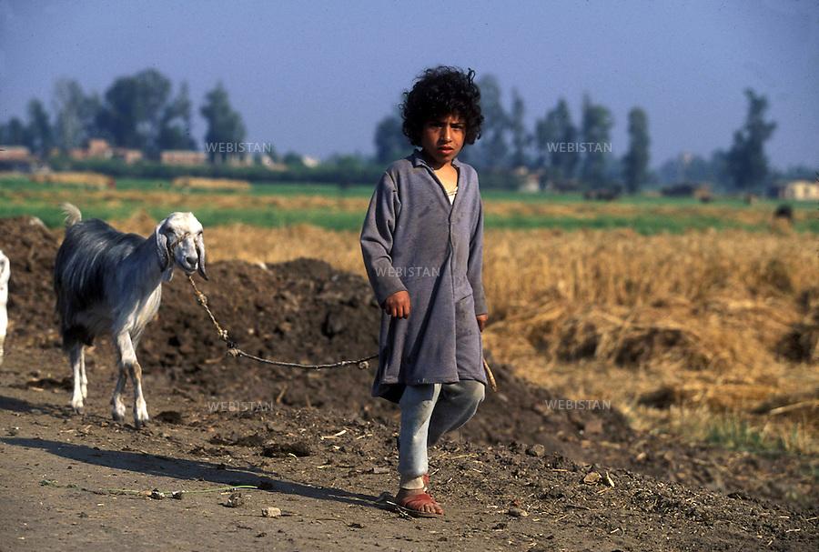 ..Egypt. Nile Delta. 1996. A young Egyptian farmer goes to the fields with his goat...Egypte. Delta du Nil. 1996. Un jeune paysan egyptien part aux champs avec sa chevre.