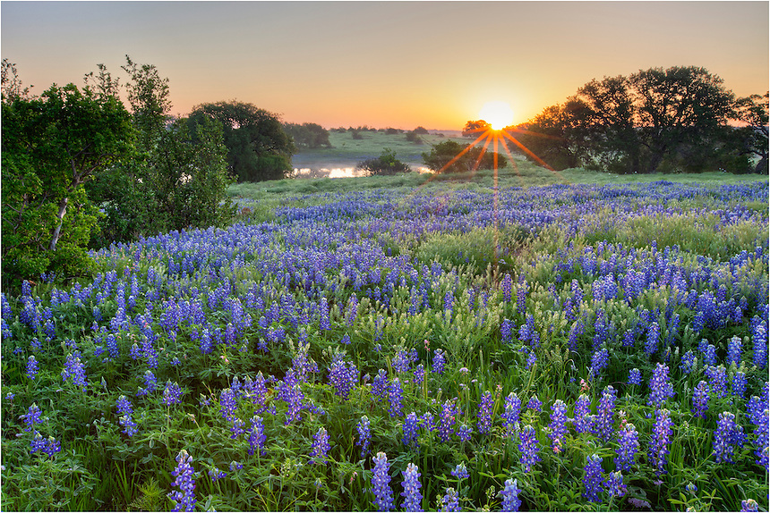 I had just about given up on finding bluebonnets on this last day of March. But as I rolled over 310, a dirt road in the Texas Hill Country, I came across this field of wildflowers just waiting for me. I quickly set up and took more than several images. It was a nice morning. And I knew I was lucky because I nearly always scout locations before returning for sunrise, but this time I had not. Whew!