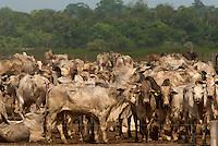 Gado - <br /> Fazenda para descanso de gado durante transporte para embarque ou abate, rod Pa 150<br /> Mojú, Pará, Brasil.<br /> 11/11/2010.<br /> Foto Paulo Santos