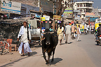 Bull roaming along street in Nandi near Varanasi, Benares, Northern India