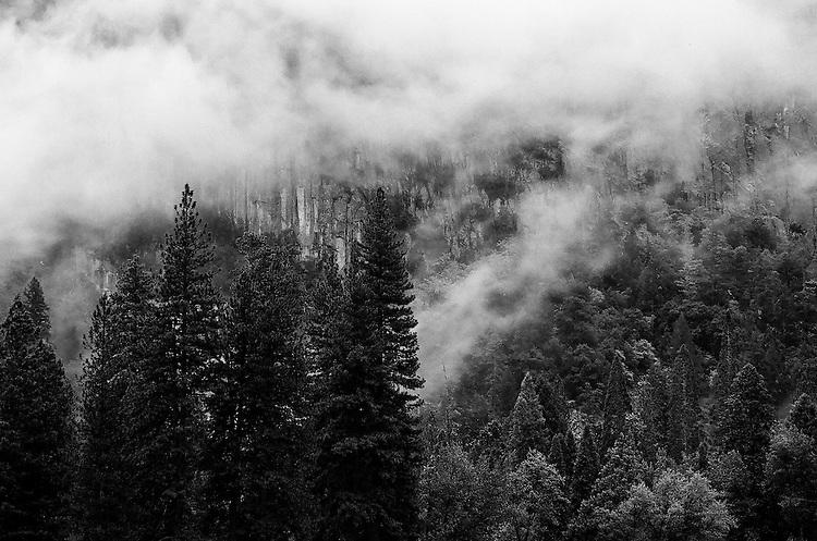 Trees and Fog, Yosemite   35mm image on Ilford Delta 100 film