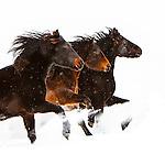 20140120 Snow Horses
