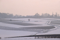 Europe/France/Poitou-Charentes/16/Charente/Env de Cognac : Le vignoble sous la neige