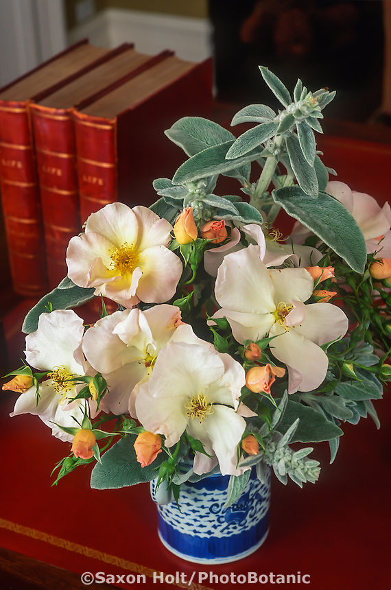 Rosa 'Sally Holmes', white flower single rose in simple rose bouquet on table with red leather books