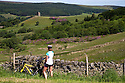 24/06/15<br /> <br /> A cyclist stops to admire the view as summer sunshine illuminates acres of purple rhododendrons surrounding Boot's Folly high up on Strines Moor in the South Yorkshire Peak District near Sheffield.<br /> All Rights Reserved - F Stop Press.  www.fstoppress.com. Tel: +44 (0)1335 418629 +44(0)7765 242650
