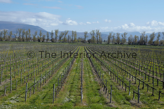 Serried ranks of vines cover the surrounding landscape around Foligno