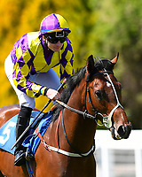 Power Seeker ridden by William Carson goes down to the start of The Penang Turf Club Malaysia Novice Stakes (Plus 10 Race) (Class 4during Afternoon Racing at Salisbury Racecourse on 17th May 2018