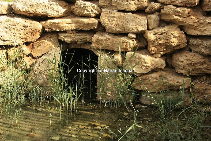 Israel, Besor region in the northern Negev. Besor spring in Eshkol National Park