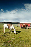 USA, Wyoming, Encampment, a horse grazes in a pasture, Big Creek Ranch