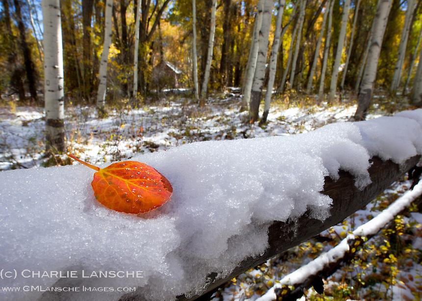 Soapstone Basin, Uinta Mountains, Utah