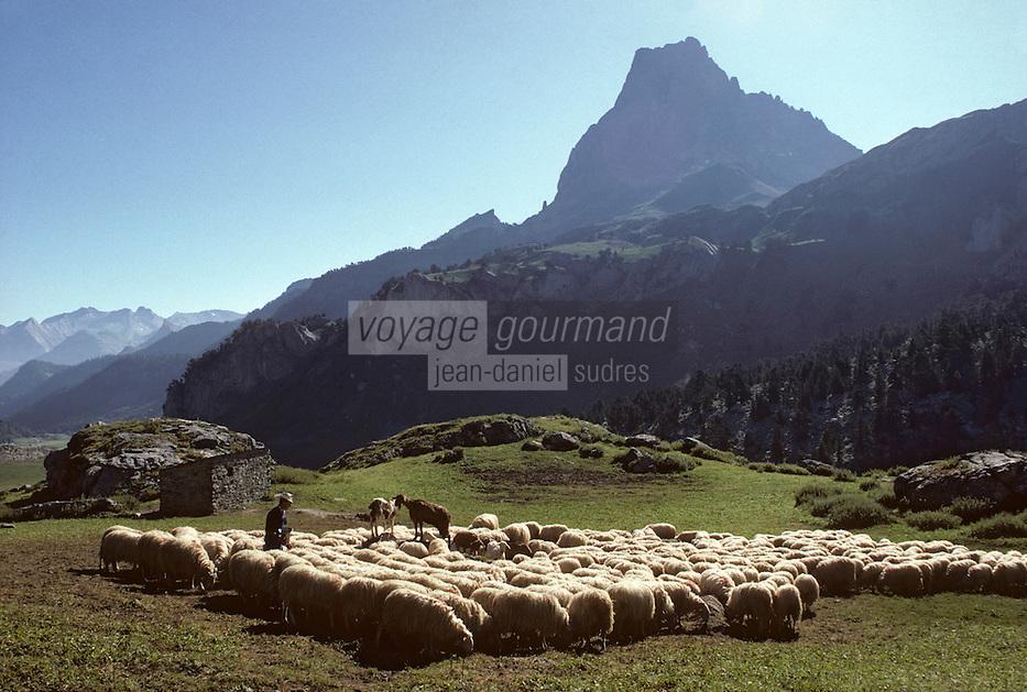 Europe/France/Aquitaine/64/Pyrénées-Atlantiques/Parc National des Pyrénées: Pic du Midi-d'Ossau: Berger et troupeau de brebis<br /> PHOTO D'ARCHIVES // ARCHIVAL IMAGES<br /> FRANCE 1980