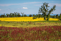 Fields of color in spirng in the Arkansas River Valley of Arkansas.