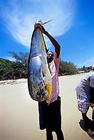 Artisanal fishing, commercial fishing, overfishing, Fisherman holds Dolphin fish / Dorado or mahi mahi, Coryphaena hippurus, caught with rod and reel. Tofo, Mozambique, Africa, Indian Ocean