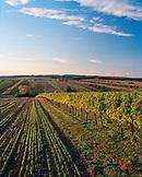 AUSTRIA, Joie, vineyard landscape on the North side of Joie, Burgenland