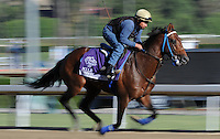 Suggestive Boy, trained by Ron McAnally, exercises in preparation for the upcoming Breeders Cup at Santa Anita Park on October 29, 2012.