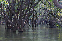 TREES IN THE TONLE SAP