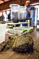 Clods of soil for slake test at Eco-Farm Conference 2018