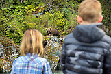 USA, Alaska, Redoubt Bay, Big River Lake, young children watching a brown grizzly bear feed from a distance in Wolverine Cove