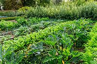 France, Sarthe (72), Le Lude, château et jardins du Lude, le potager, courgettes jaunes, navets, cardons, poireaux