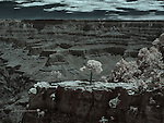 South Rim - Overlook near El Tovar, Infrared