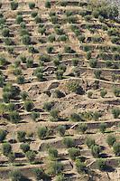 olive grove douro portugal