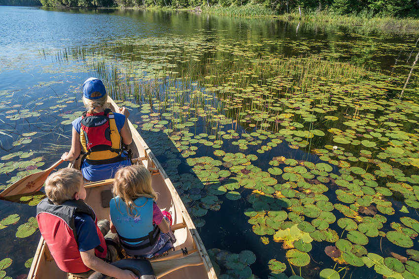 Paddling a red canoe among lily pads, Michigan's Upper Peninsula.