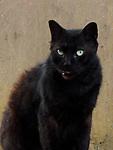 Pirata / Gato negro / Ciudad de Panamá.<br /> <br /> Edición de 3 | Víctor Santamaría.