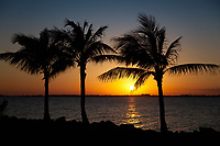 Palm Trees, Sunset, Boca Chica Key, Florida Keys, FL, America, USA.