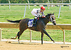 Midnight on Oconee winning at Delaware Park on 8/29/15