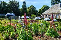 France, Loir-et-Cher (41), Cheverny, château de Cheverny, le jardin bouquetier, poireaux en fleurs au premier plan