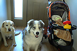 2 Dogs and baby stroller with Lev Weigel, 3 weeks.
