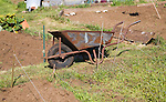 Metal wheelbarrow on allotment garden, Shottisham, Suffolk, England