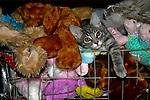 2007 Copyright  Whitney Lauren Robinson Stubbart / Lambi Arts Animal Photography Domestic Cat