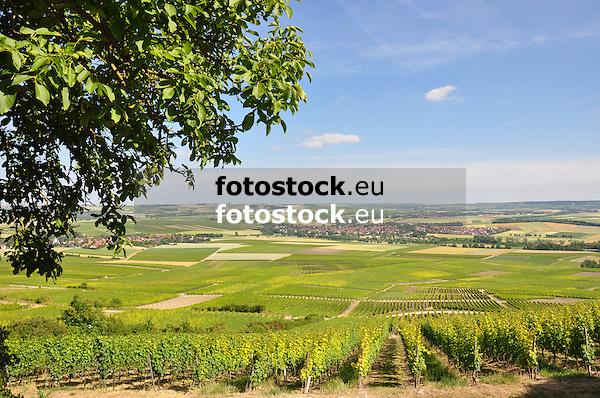Blick vom Wißberg über Weinberge auf Wallertheim und das Rheinhessische Hügelland