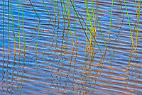 Reeds on Lac des Sables at sunrise<br />