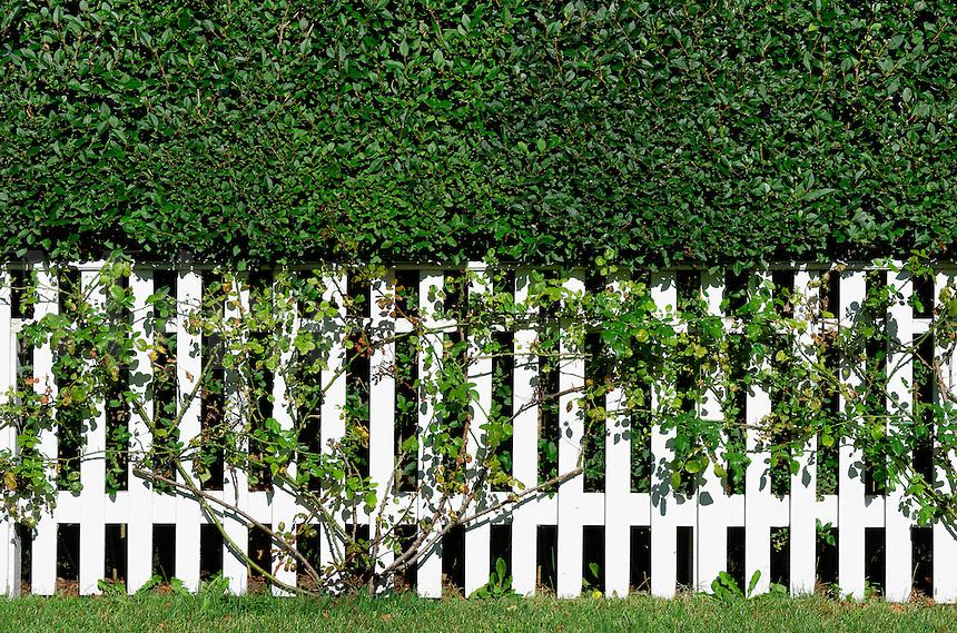 White picket fence, New England, USA