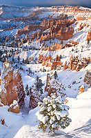 730750101c winter sunrise lights up the snow covered hoodoos a fir tree and the surrounding landscape in bryce canyon national park utah