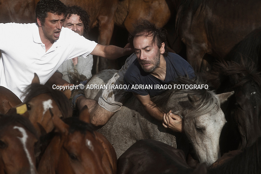 When summertime comes in Galicia (Northwest of Spain), the use of &ldquo;curro&rdquo; begins. A ritual which preserves the free and wild spirit of this region which has remained traditionally tied to nature.<br /> This tradition consists of marking and shaving horses' horsehair from those who live in freedom. It happens in the &ldquo;curros&rdquo;, closed stalls where locals gather the cattle. The most expert breeders, called &ldquo;aloitadores&rdquo;, hold a huge struggle with the horses until these are tamed. They mark them with hot irons to identify the owner and the horsehair is cut for their well-being in the wild. Afterwards they are taken back into the forests where they live.<br /> Sabucedo's Rapa Das Bestas, 40 km from the capital Santiago de Compostela, is the most famous &ldquo;curro&rdquo; in Galicia. Every year more than 500 horses are gathered from Montouto Hills and it features the struggle with bare hands between man and animal. Around Rapa Das Bestas a feast takes place, with tasting of octopus and wine, therefore it turns into an authentic popular festival. &copy; Adri&aacute;n Irago