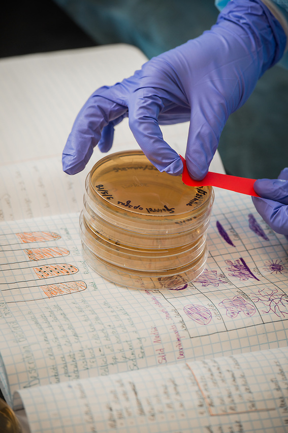 A student labels bacteria cultures and prepares them for storage after recording their observations during Microbial Biology Experiential Learning Lab (MBIO A342) in UAA's ConocoPhillips Integrated Science Building.