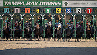 OLDSMAR, FLORIDA - FEBRUARY 11: The field leaves the gate for the start of the Sam F. Davis Stakes at Tampa Bay Downs on February 11, 2017 in Oldsmar, Florida (photo by Douglas DeFelice/Eclipse Sportswire/Getty Images)