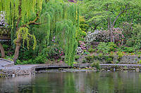 ORPTC_D169 - USA, Oregon, Portland, Crystal Springs Rhododendron Garden, Weeping willow and blooming rhododendrons above Crystal Springs Lake.