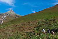 Europe/France/Aquitaine/64/Pyrénées-Atlantiques/Pays-Basque/ Env d'Urrugne:  Randonnée équestre sur le Sentier des Contrebandiers   avec en fond le massif de la Rhune 905 m [Autorisation : 2011-125] [Autorisation : 2011-126] [Autorisation : 2011-127]