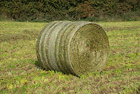 Round bale of silage in a field, Cheshire.