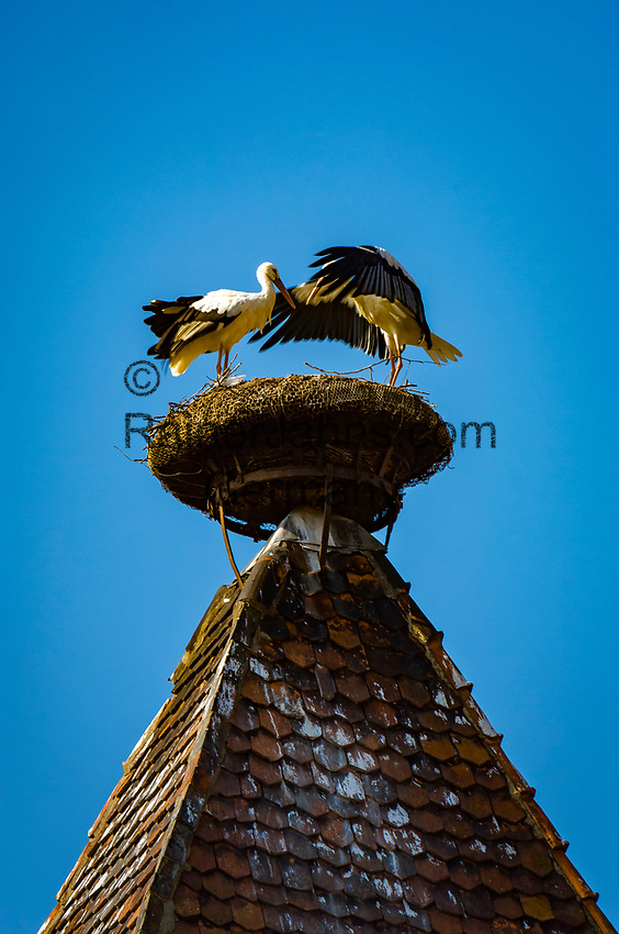 France, Alsace, Haut-Rhin, Rouffach: stork's nest on top of witch tower, former prison | Frankreich, Elsass, Haut-Rhin, Rouffach: Storchennest auf dem Hexenturm, der frueher als Gefaengnis diente