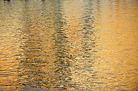 golden ripple water reflections