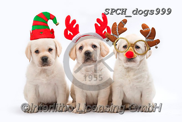 Xavier, CHRISTMAS ANIMALS, WEIHNACHTEN TIERE, NAVIDAD ANIMALES, fondless, photos+++++,SPCHDOGS999,#xa#