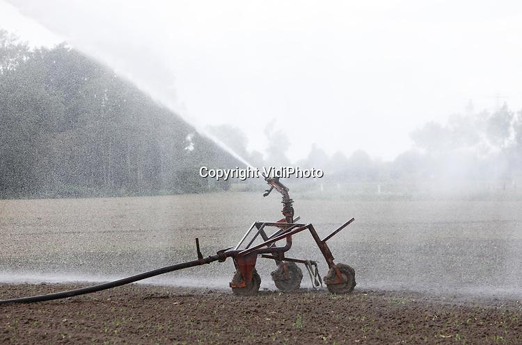 Foto: VidiPhoto<br /> <br /> HERVELD – Alles wat groeit en bloeit heeft op dit moment hetzelfde probleem: een ernstig tekort aan water. Daarom worden waterkanonnen massaal ingeschakeld, zelfs als het hard waait en het water snel verdampt of minder effectief ingezet kan worden, zoals zaterdag bij zowel grasland als ingezaaid maisveld in Herveld in de Betuwe. Waterschappen in Noord-Brabant en Limburg hebben het onttrekken van oppervlaktewater aan banden gelegd. Vallei en Veluwe heeft op sommige plekken een beregeningsverbod ingesteld. In het Rivierengebied is er vooralsnog water genoeg om te beregenen, maar het water in de grote rivieren zakt in snel tempo. Het neerslagtekort bedraagt op dit moment al ruim 120 millimeter en loopt de komende weken alleen maar op. Neerslag van betekenis wordt er niet verwacht. Zelfs in het recordjaar 1976 was het in deze tijd van het jaar niet zo droog.