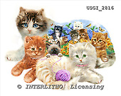 GIORDANO, CUTE ANIMALS, LUSTIGE TIERE, ANIMALITOS DIVERTIDOS, paintings+++++,USGI2816,#AC# ,shape puzzles cats,kittens, dogs,puppies,